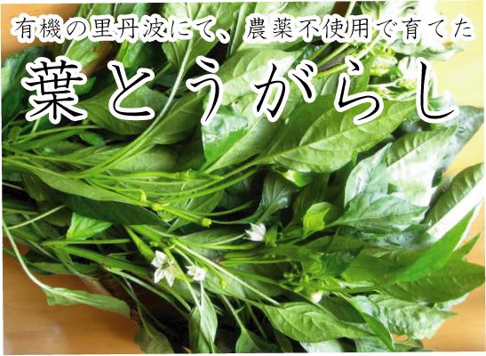葉とうがらし 有機の里丹波から産地直送無農薬の葉唐辛子